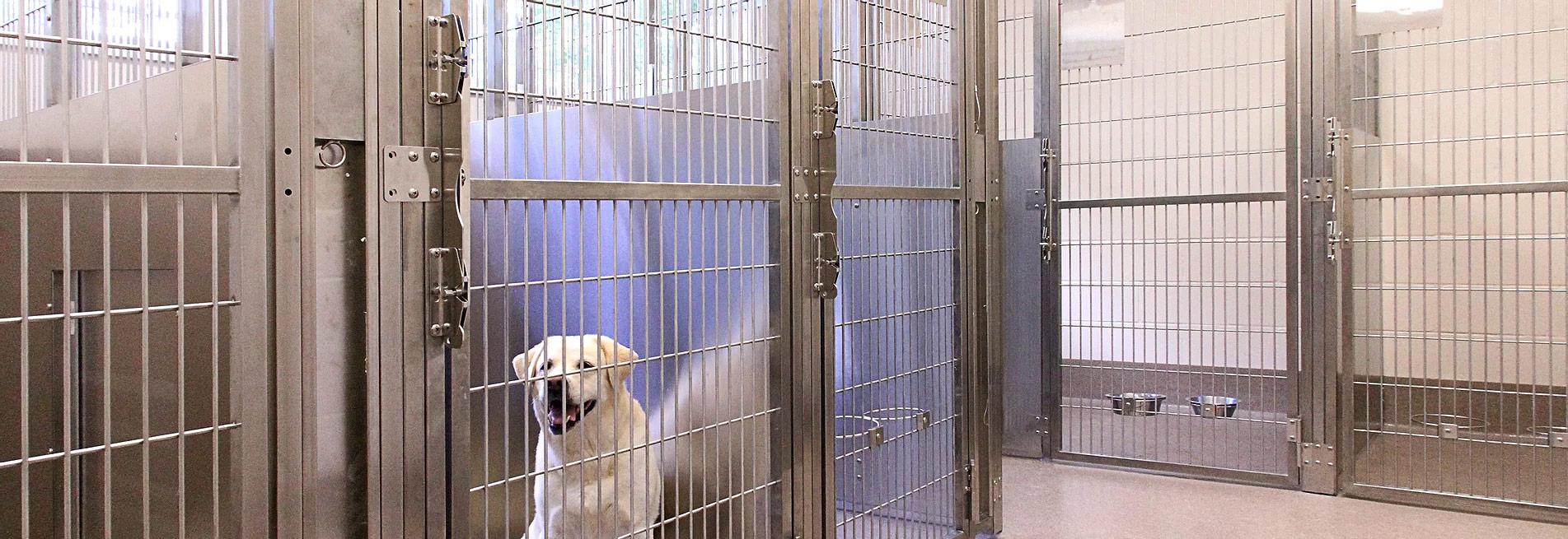 Bridgewater shelter dog
