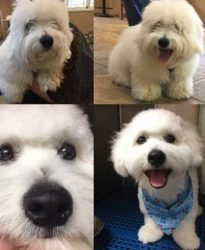 dog grooming before or after
