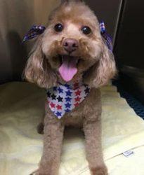 Groomed dog looking happy
